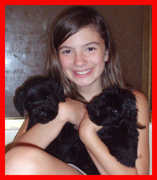 Giant Schnauzer Puppies on Azzuma Giant Schnauzers And Giant Schnauzer Puppies
